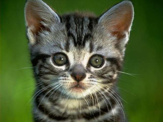 Cats Screensavers